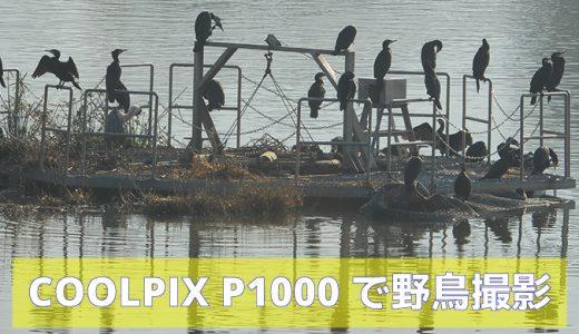 COOLPIX P1000で野鳥を撮影(バードウォッチング)
